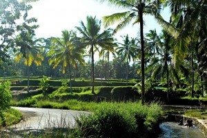 Yoga-of-sound-retreat-Bali